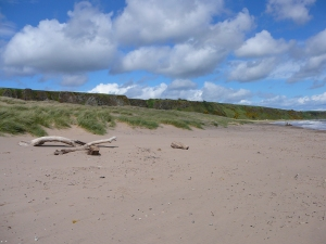 St Cyrus dunes and relict cliff line