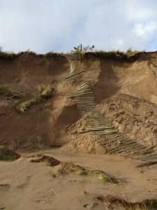 Fencing collapses from the top of the unstable dunes.